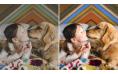 Adobe Photoshop Elements 2021 | Windows | Multilanguage